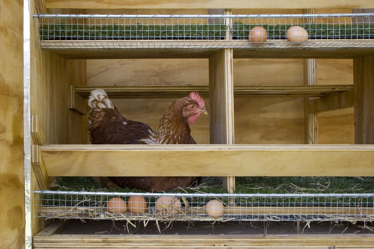 Гнездо с яйцесборником для кур несушек своими руками фото размеры