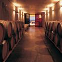 Ventolera Winery / Francisco Izquierdo