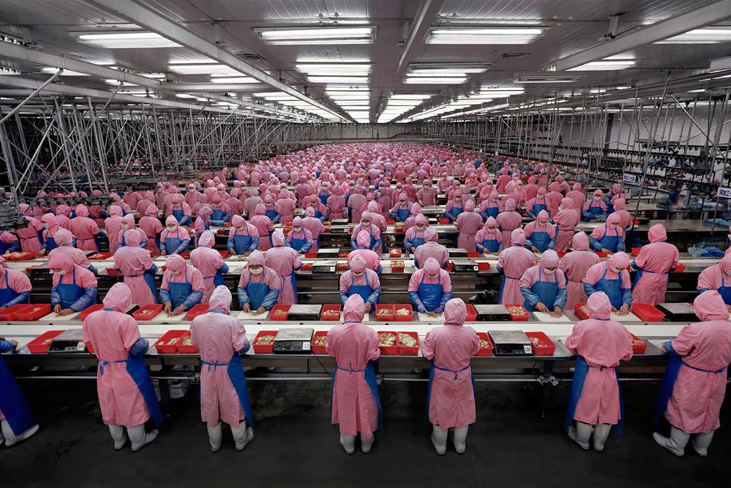 Deda Chicken Processing Plant, Dehui City, Jilin Province, 2005. Photograph, Edward Burtynsky