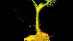 ¿Pueden los árboles luminosos llegar a sustituir el alumbrado eléctrico?