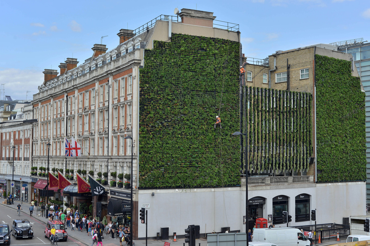 "London's Largest ""Living Wall"" / Gary Grant, Courtesy of Green Roof Consultancy and Treebox"