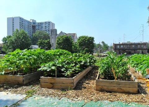 Milwaukee Urban Farm Movement Grows, Courtesy of Truly Living Well Center for Natural Urban Agriculture
