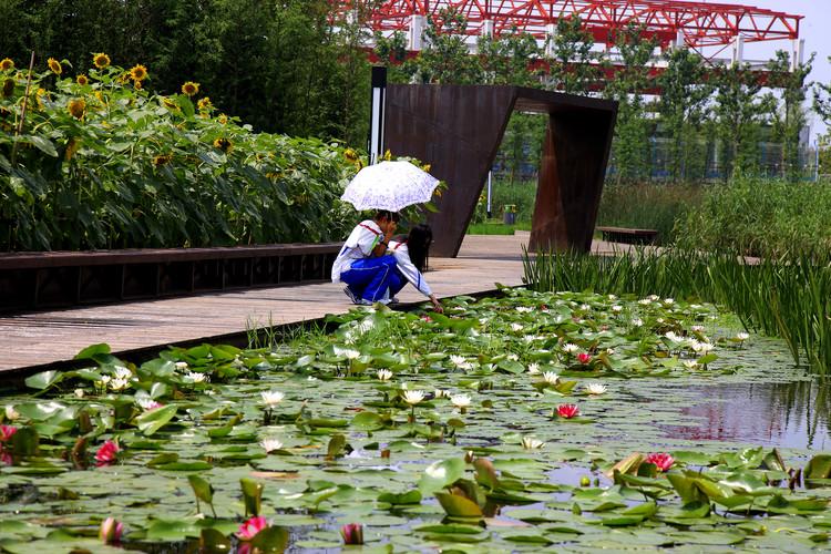 Parque Houtan en Shanghai / Turenscape, Cortesía de Turenscape