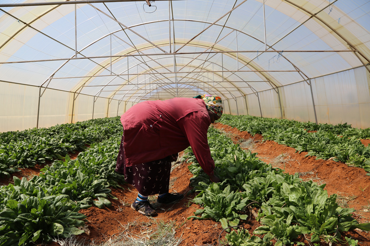 Enseñanza de la Permacultura en Sudáfrica. Image © ONU