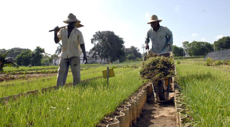 Agricultura Urbana en Cuba. Image © Roberto Suárez