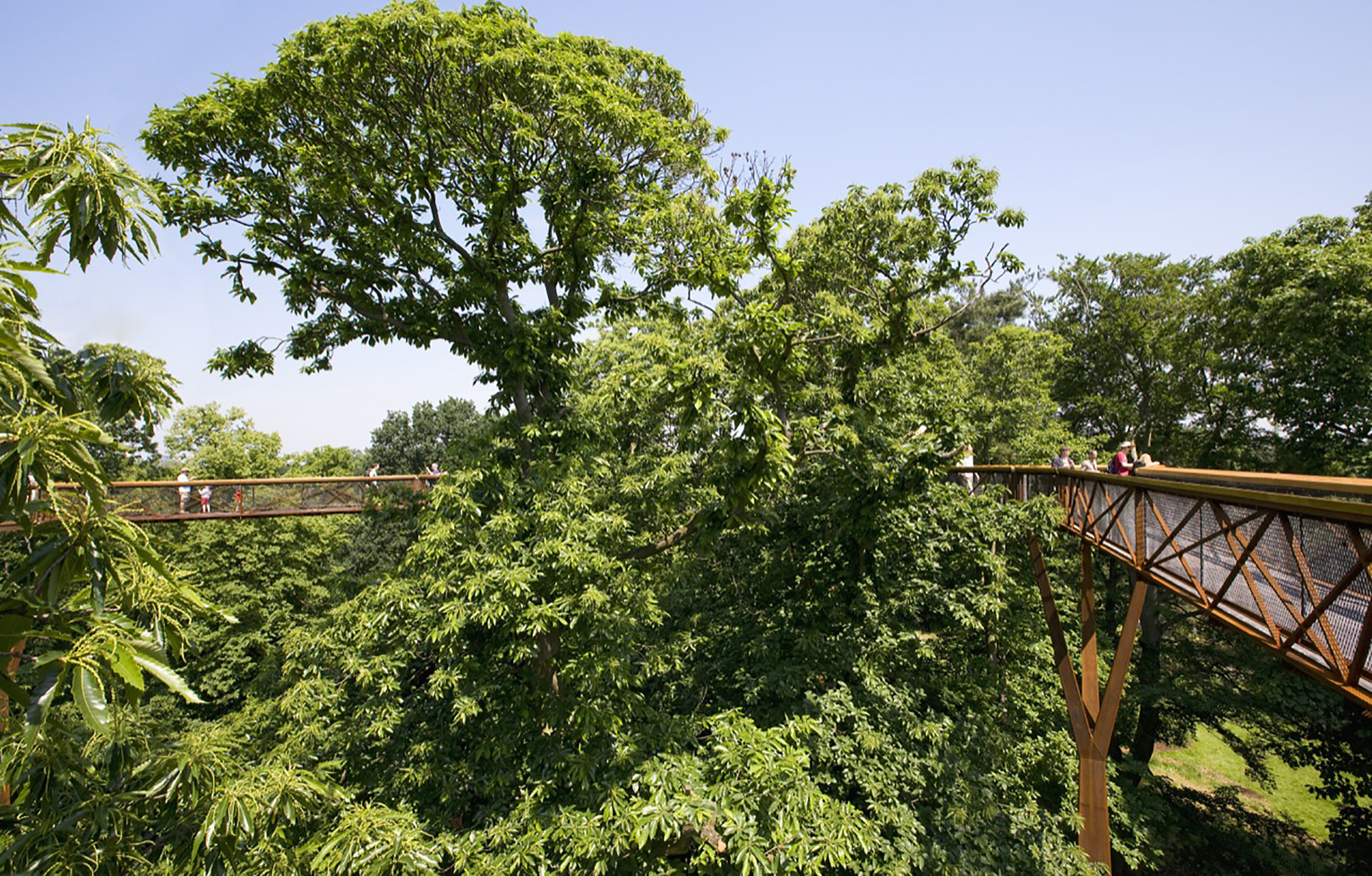 Gallery of kew tree top walkway rhizotron marks for Garden trees london