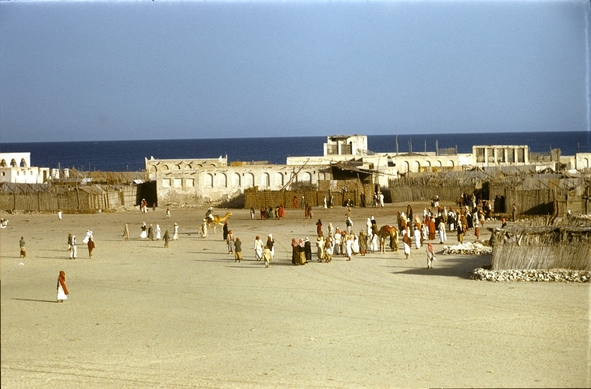 Llegada de una carrera de camellos, Dubai, 1950 © Ronald Codral; Cortesía de Codrai Gulf Collection - Abu Dhabi Tourism and Culture Authority