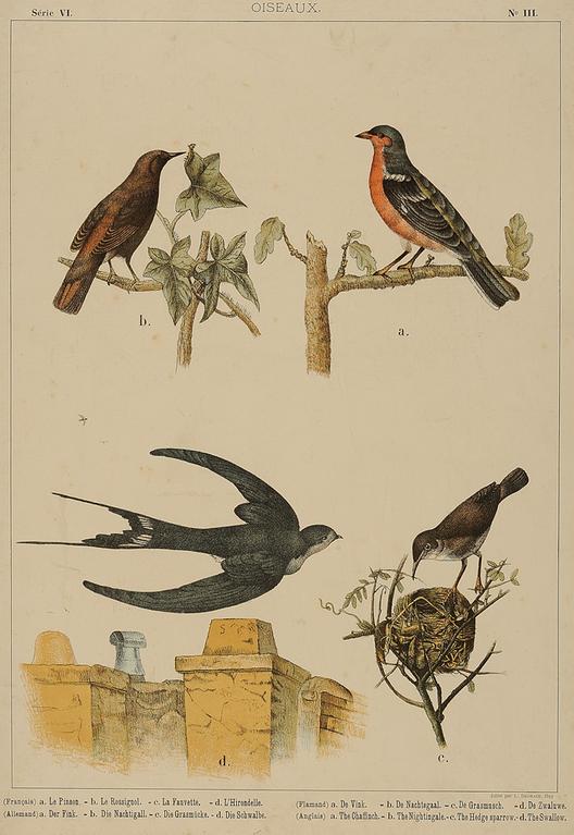 Aves  Litografía  55 x 39 cm  Colección Museo de la Educación Gabriela Mistral. Image Courtesy of Centro Cultural La Moneda