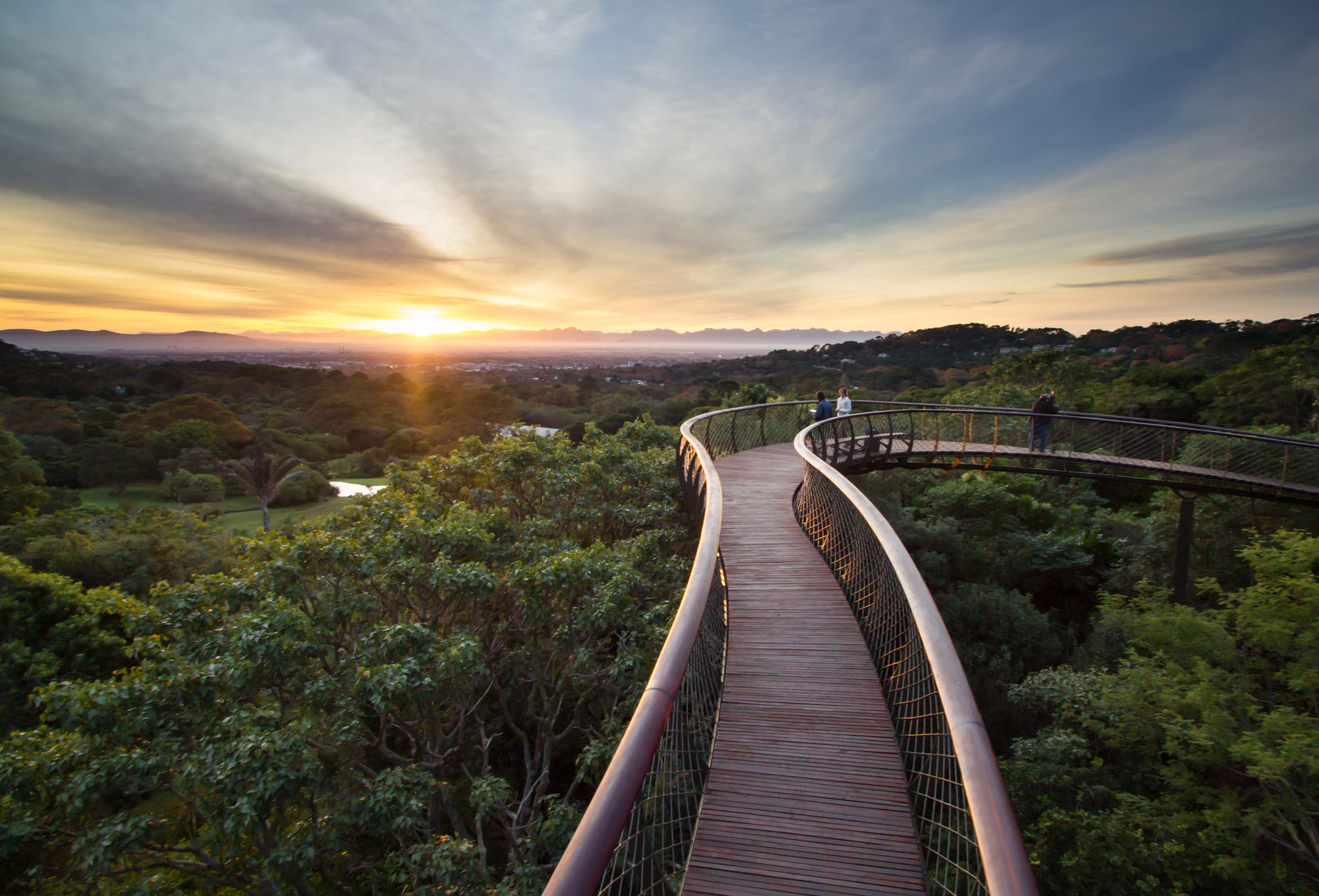Kirstenbosch Centenary tree canopy walkway / Mark Thomas Architects, © Adam Harrower