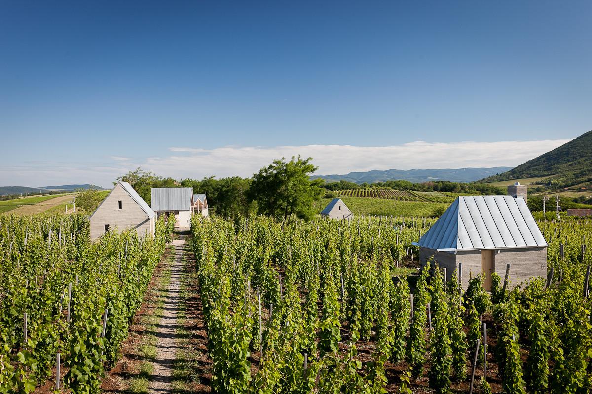 Terraza de viñedo y spa / Gereben Marián Architects, © Zsolt Frikker