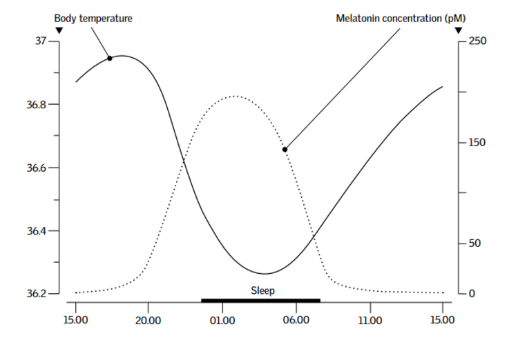 Concentración de Melatonina v/s Temperatura del Cuerpo. Image Cortesía de VELUX Group
