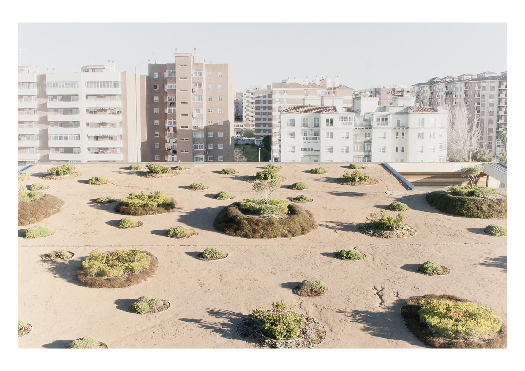 Paisaje y Arquitectura: Parque, jardines y cubierta verde de Caja Badajoz por Cjcpaisaje, © Cristina Jorge Camacho