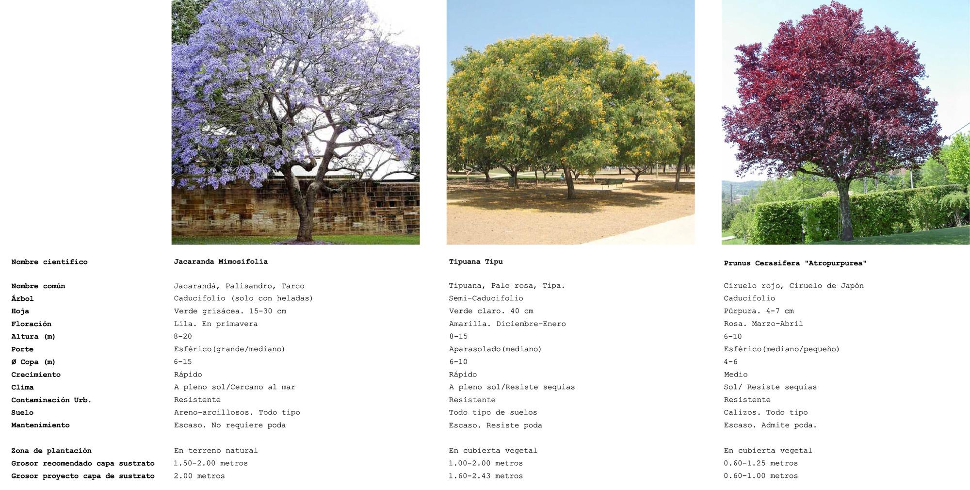 Especies arbóreas