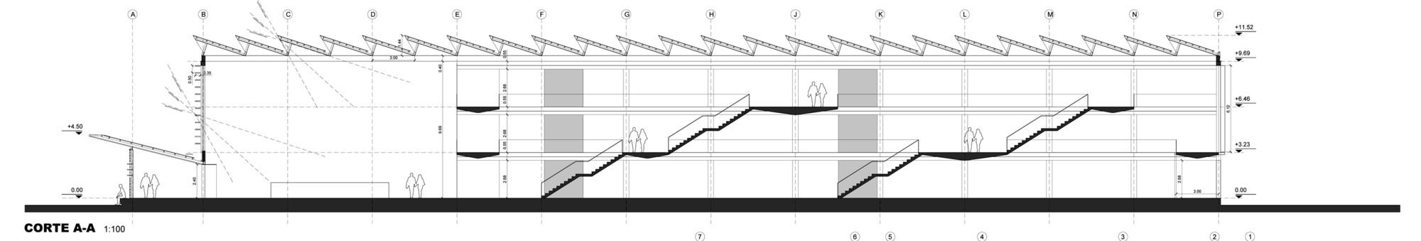 Corte/Sección Longitudinal