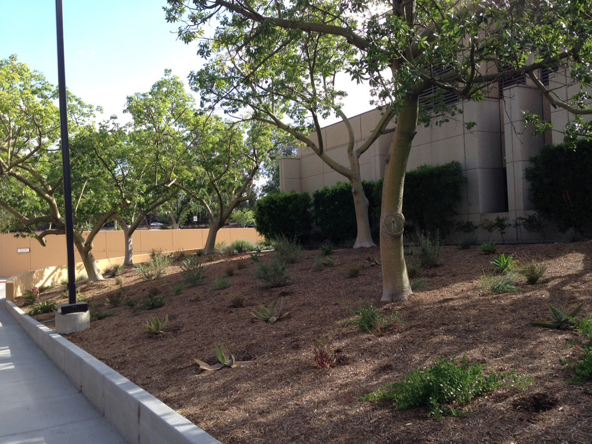 Campus Refresh Woodland Hills. Image Courtesy of Stay Green Inc.