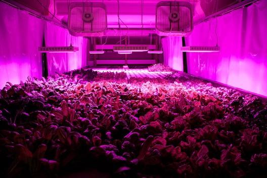 © Flickr user Plant Chicago