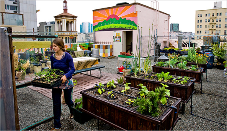 A rooftop garden in San Francisco. © Peter Dasilva for the New York Times.
