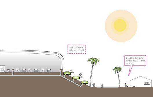 Section of Linear Algae Farms
