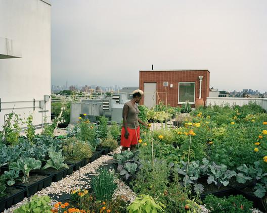Sementes para um jardim em cobertura, Crown Heights, Brooklyn. Imagem © Rob Stephenson for the Design Trust for Public Space