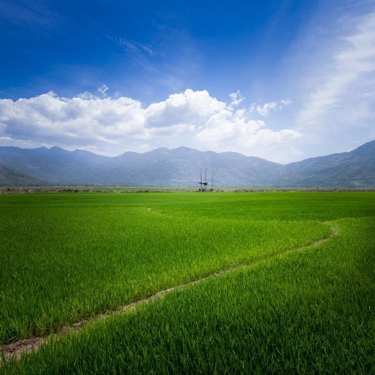 © Quangdam