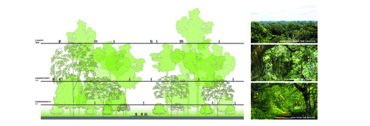 Learning from the natural stratification of the forest structure. Image Courtesy of MKPL Architects
