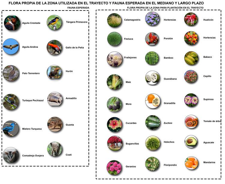 Flora y fauna. Image Cortesía de Estudio 685
