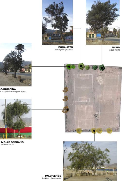 Vegetación pampa urbana Canto Grande