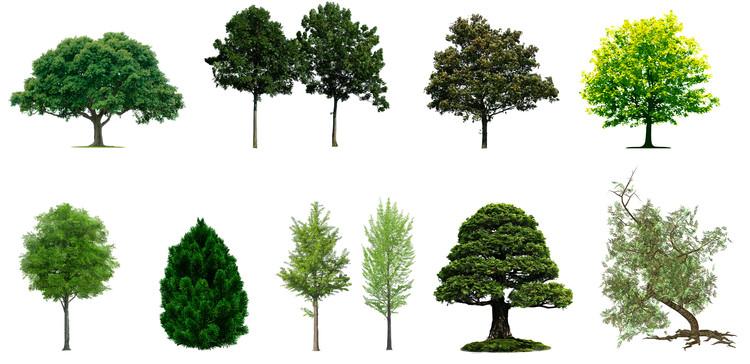Sitio libera docenas de imágenes de vegetación para insertar en tus renders y fotomontajes