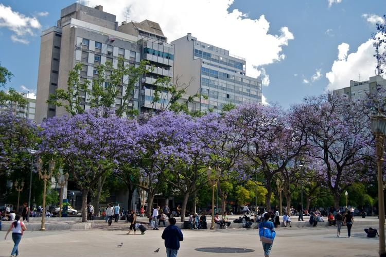 Un mapa interactivo permite ubicar los árboles de Jacarandá, el símbolo de la primavera en Buenos Aires, vía Flickr user: Beatrice Murch Licensed under CC BY 2.0
