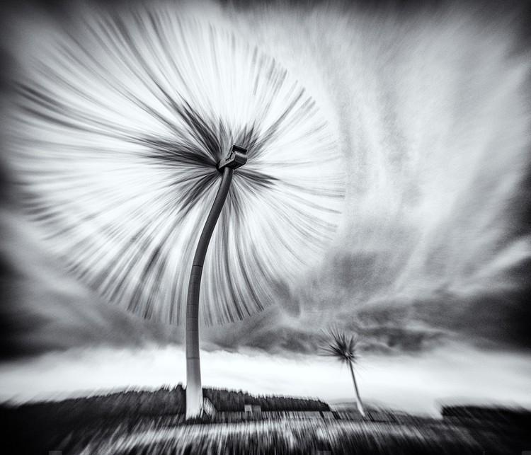 """""""The Turbo Dandelion Wind Farm"""". Imagen © Derek Snee"""
