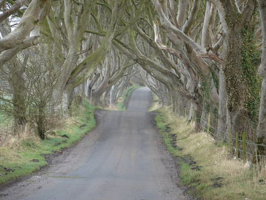 The Dark Hedges: King's Road. Image © <a href='http://www.geograph.org.uk/photo/515088'>Geograph user Ian Paterson</a> licensed under <a href='http://https://creativecommons.org/licenses/by-sa/2.0/deed.en'>CC BY-SA 2.0</a>