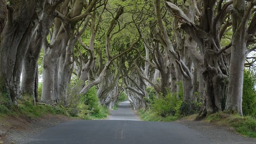 The Dark Hedges: King's Road. Image © <a href='http://ift.tt/2vqIOI1 user Colin Park</a> licensed under <a href='http://https://creativecommons.org/licenses/by-sa/2.0/deed.en'>CC BY-SA 2.0</a>