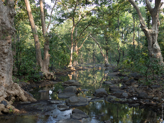 Panna Tiger Reserve, India. Image © <a href='http://ift.tt/2uIcynS user Christopher Kray</a> licensed under <a href=' http://ift.tt/2a7gdBj BY 2.0</a>