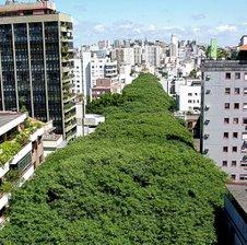 """Rua Gonçalo de Carvalho """"a mais bonita do mundo"""" / Porto Alegre - RS, Foto: Ricardo Stricher/PMPA"""