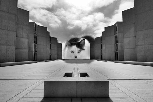 A Invasão de LOLCats Arquitetônicos, Louis Kittahn