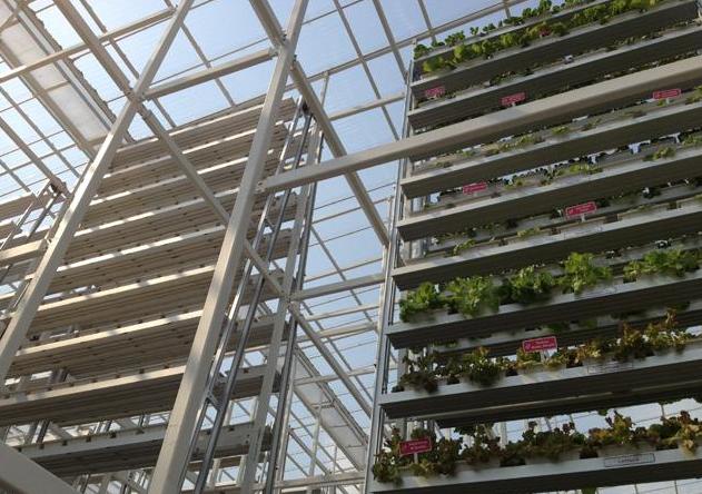 Primeira Fazenda Vertical Comercial Inaugurada em Singapura, Vegetais cultivados em múltiplos níveis em uma fazenda vertical.  Imagem via Olivia Siong, Channel News Asia