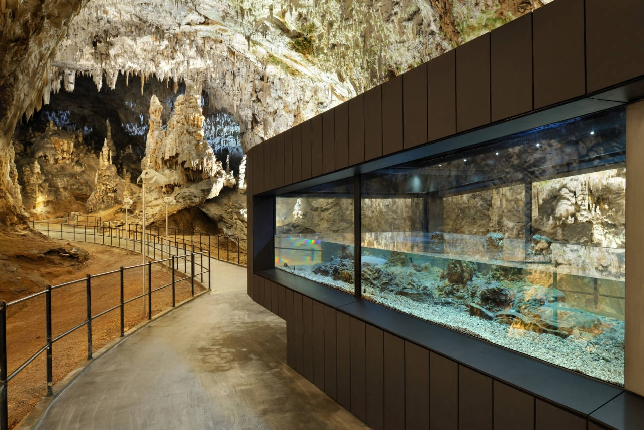 Gallery of human fish pool in the postojna cave studio for Fish caves for aquarium