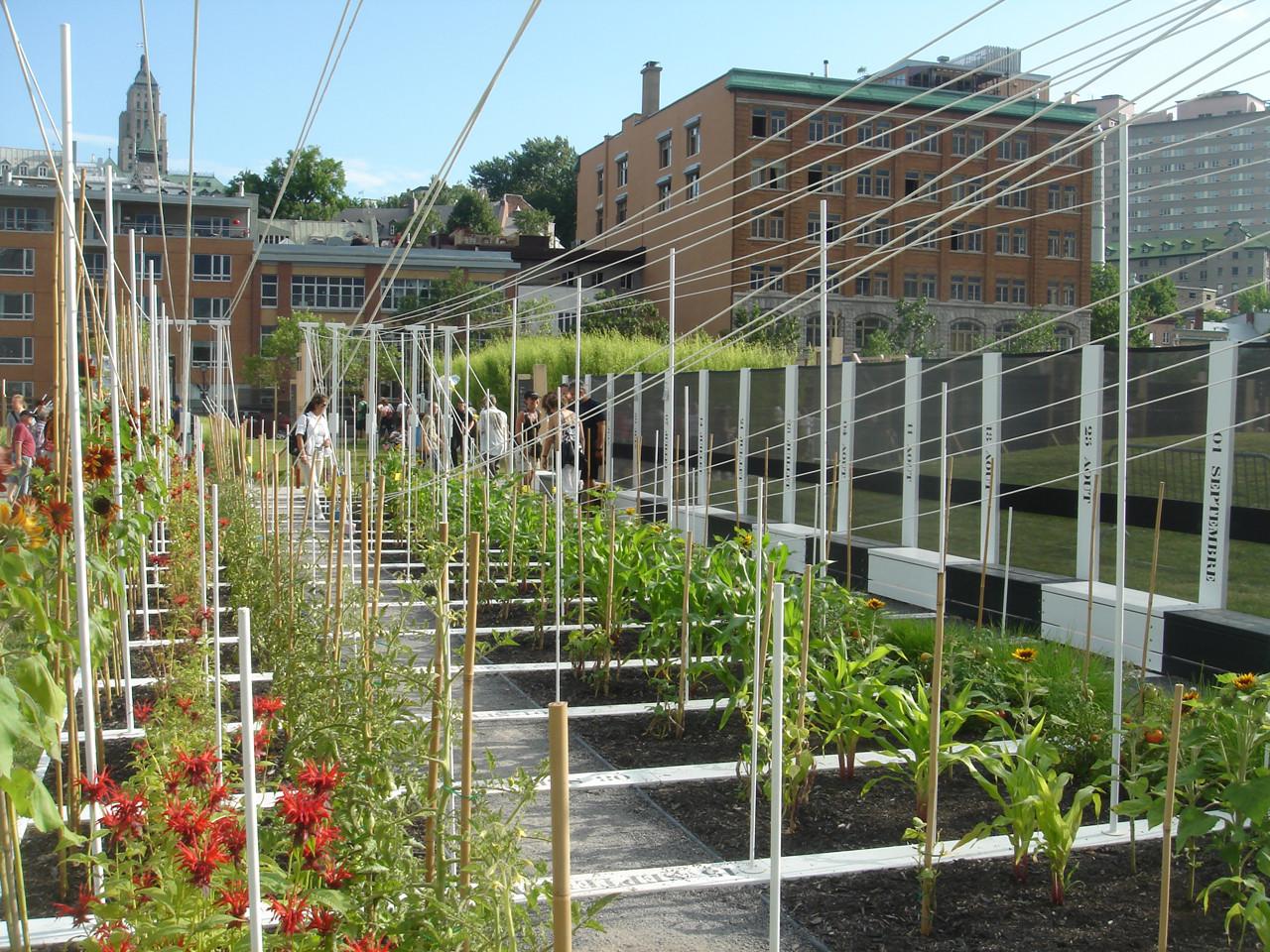 Boustrophedon Garden / PLANT Architect, © Mary Tremain