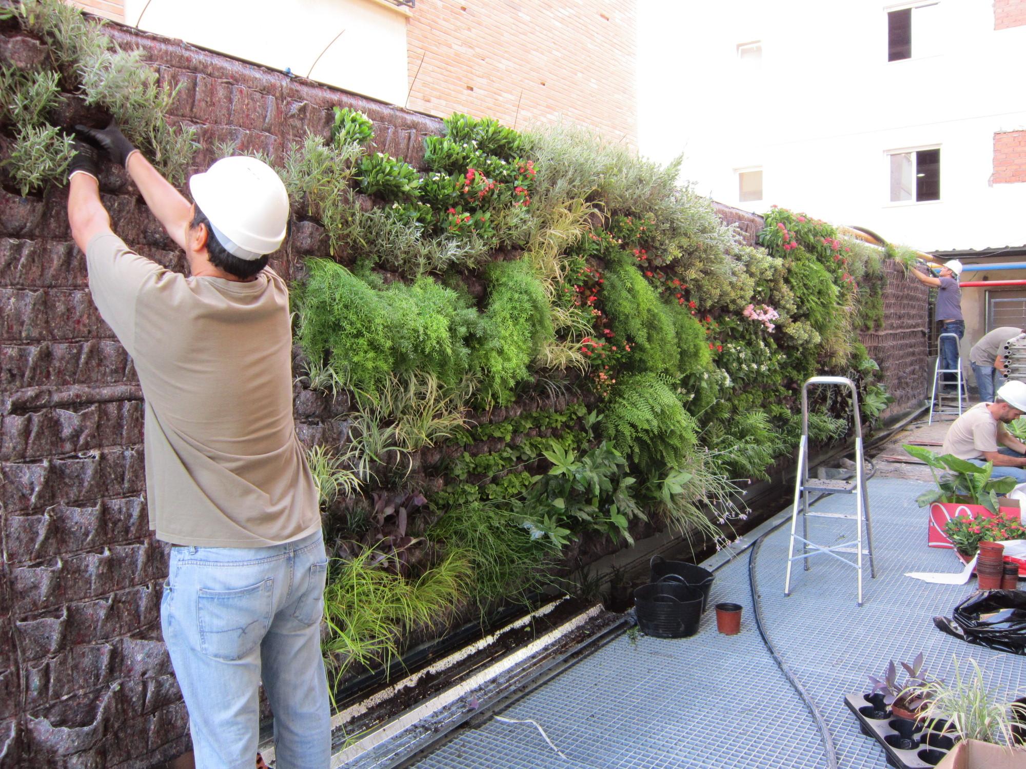 Galeria de em detalhe jardim vertical na cl nica usp for Imagenes de jardines verticales pequenos