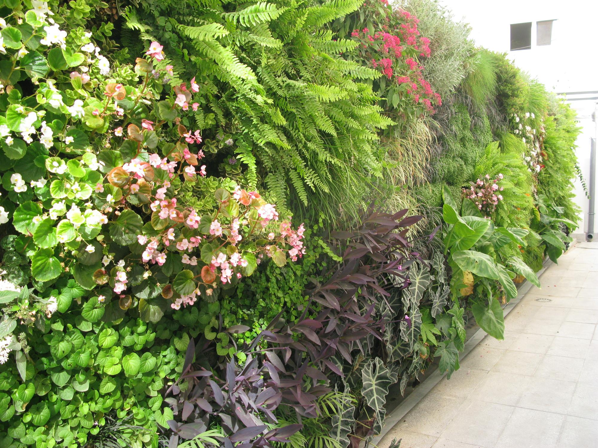 Galeria de em detalhe jardim vertical na cl nica usp for Plantas usadas para jardines verticales