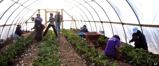 Chicago's Mayor Launches Transformative Urban Farming Plan, © M. Spencer Green via Huffington Post