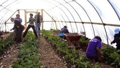 Chicago's Mayor Launches Transformative Urban Farming Plan