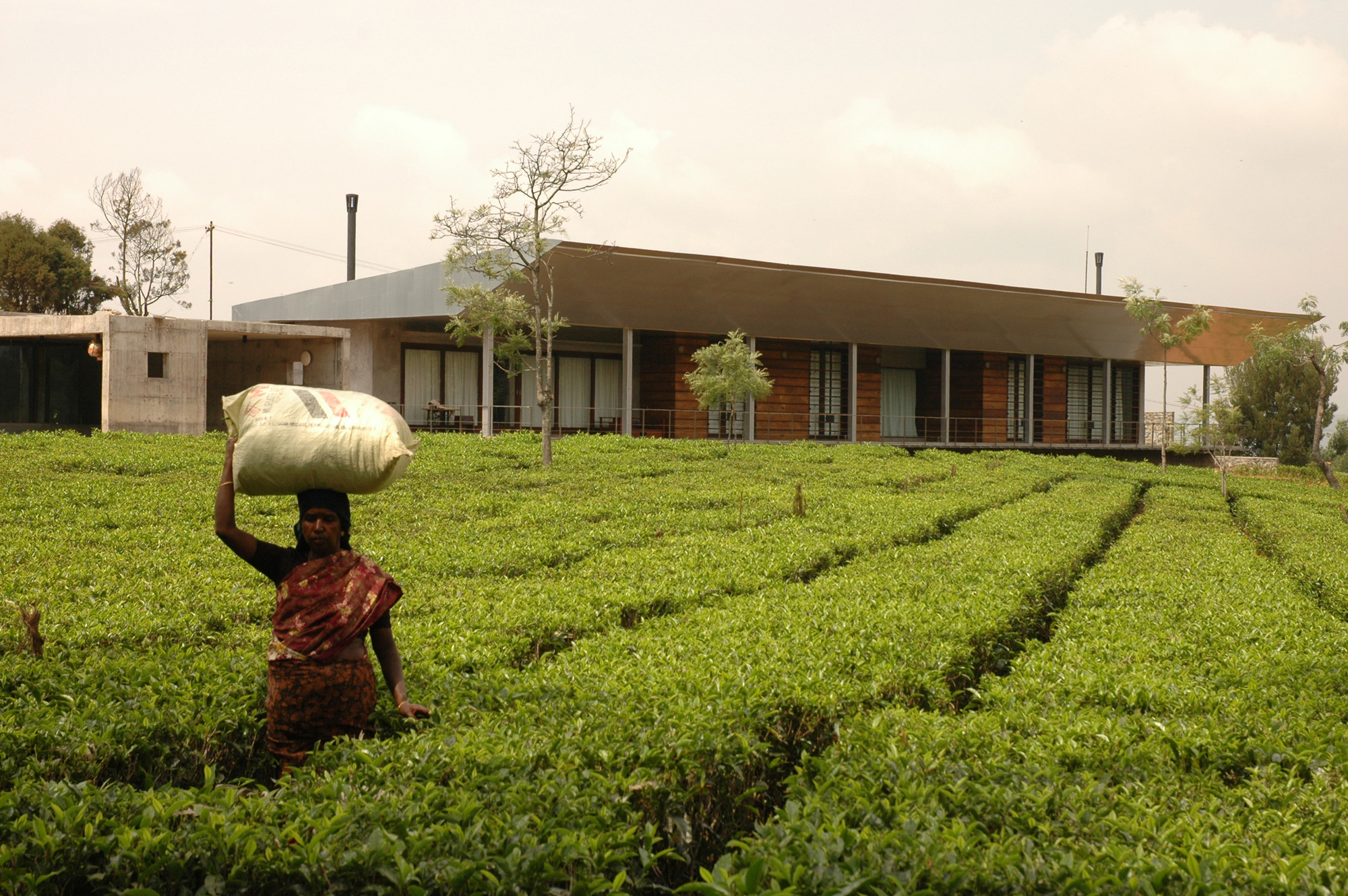 House in a Tea Garden / RMA Architects, © Rahul Mehrotra