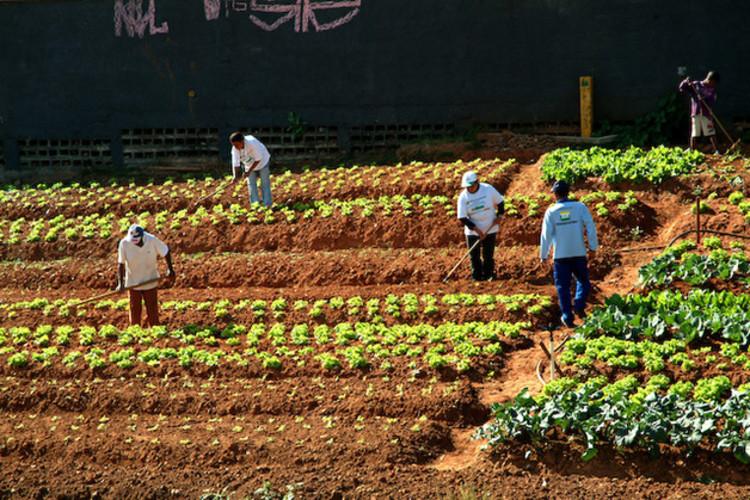 Produção de alimentos e geração de empregos em áreas abandonadas em SP, Cortesia de hypeness