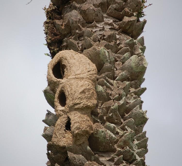 La naturaleza haciendo arquitectura: las construcciones del pájaro Hornero