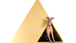 """Mostra """"Dogchitecture"""" - reinventando a casa para cachorros"""