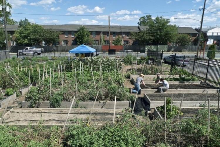 A agricultura urbana como ferramenta de desenvolvimento urbano, ©  tcd123usa, via Flickr