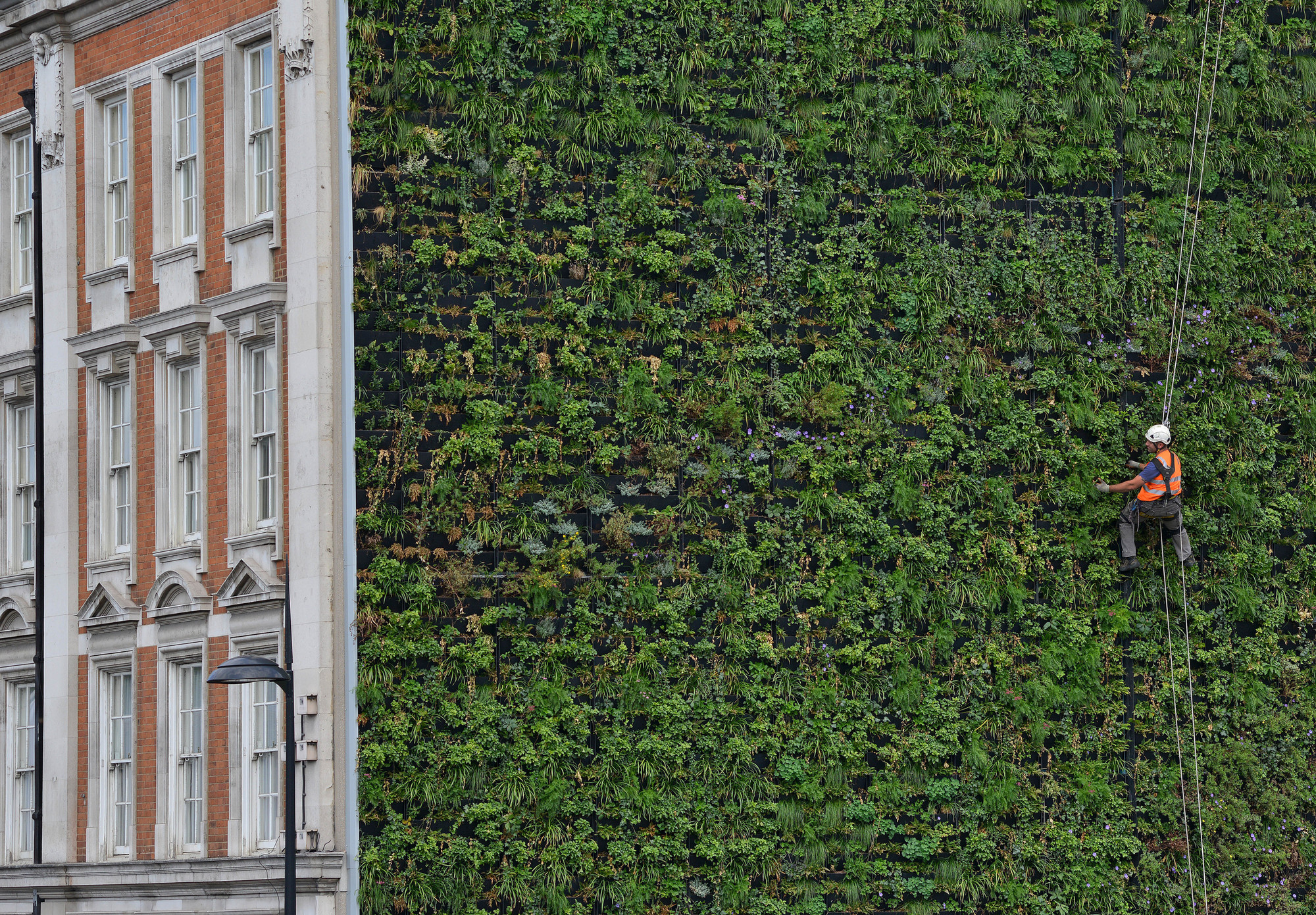 """London's Largest """"Living Wall"""" / Gary Grant"""