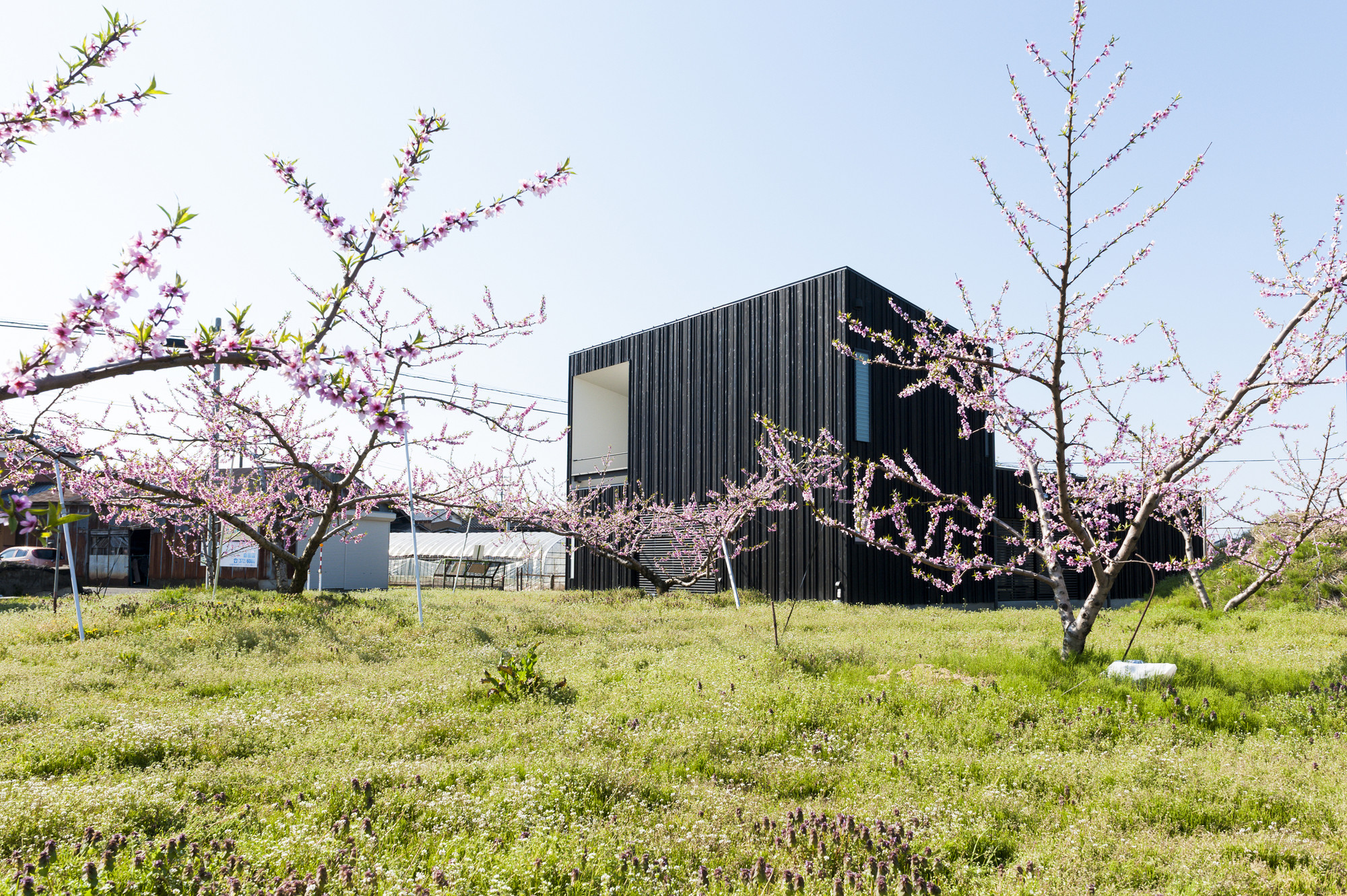 Courtyard House in Peach Garden / Takeru Shoji Architects, © Murai Isamu