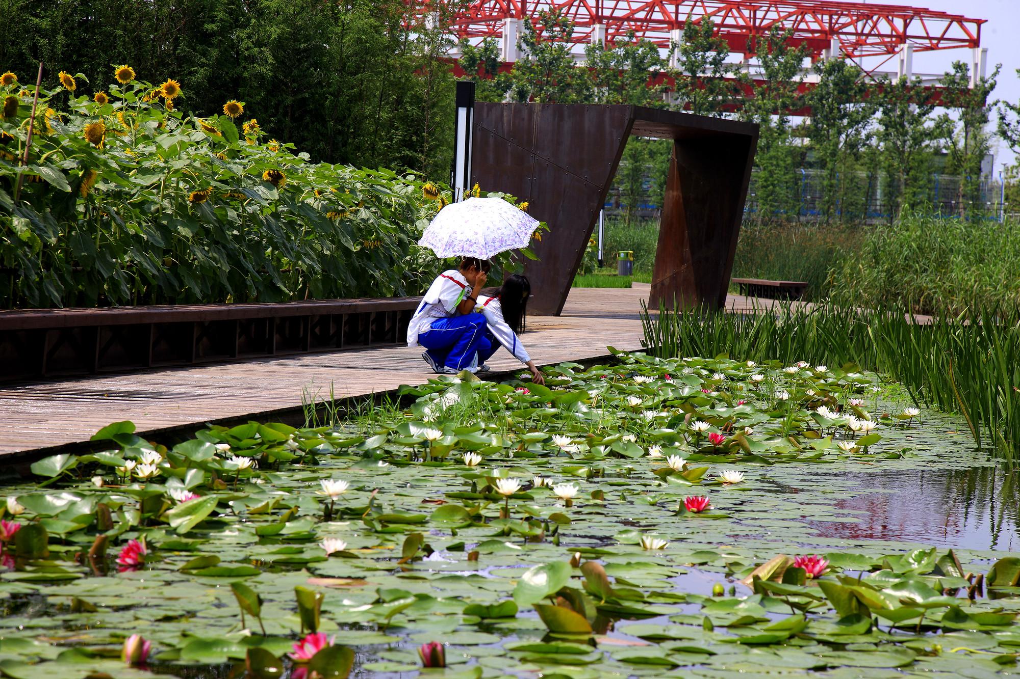 Parque Houtan en Shanghai / Turenscape